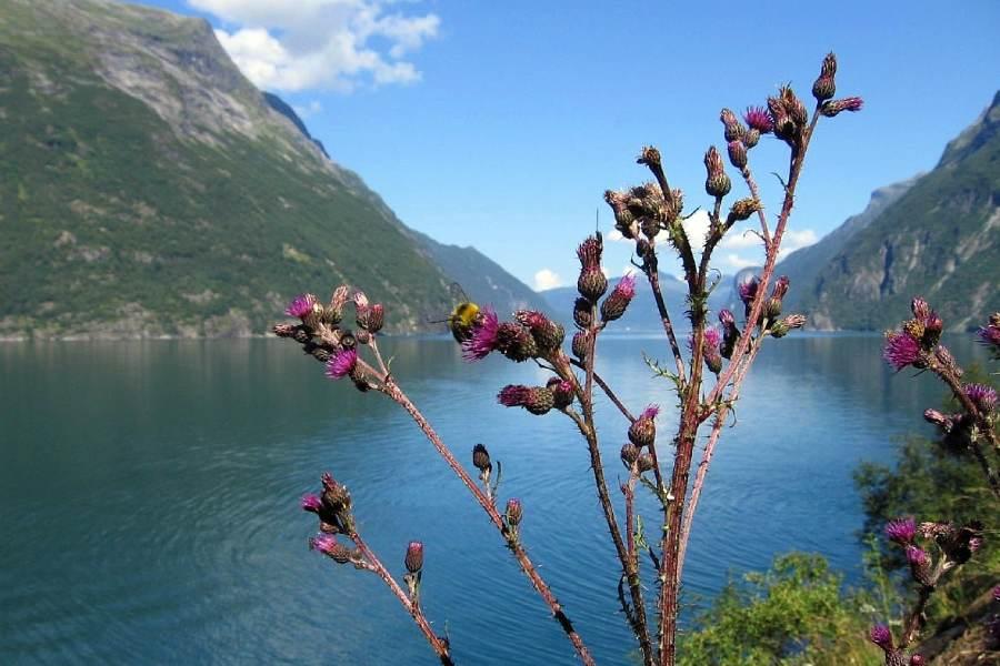 Ostoja szamana-Fiordy Norwegia (15)