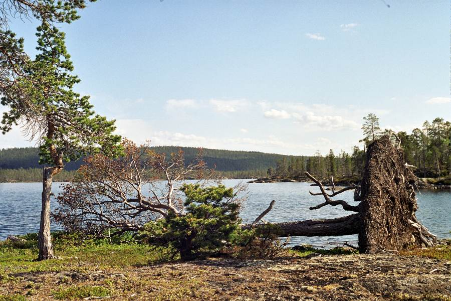 Ostoja szamana-Laponia (10)