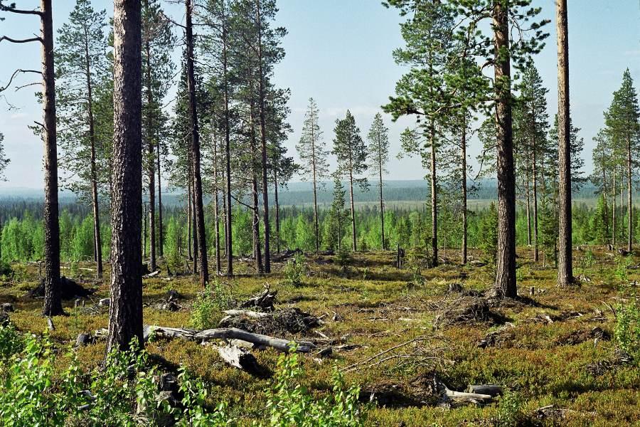 Ostoja szamana-Laponia (2)