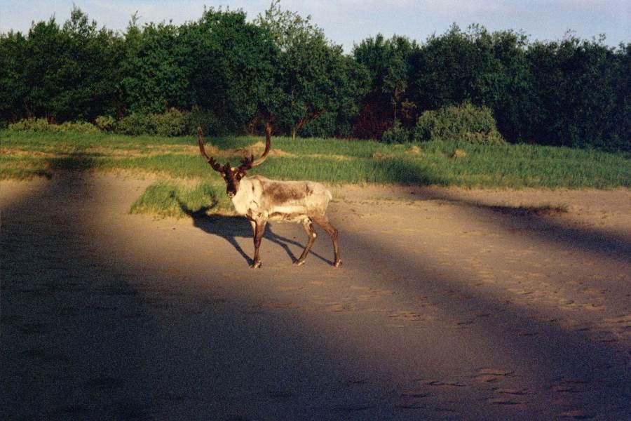 Ostoja szamana-Laponia (8)