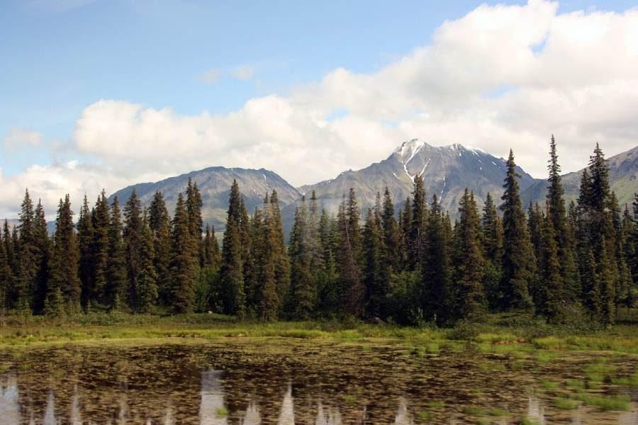 Ostoja szamana-Alaska -w pogoni za misiem (14)