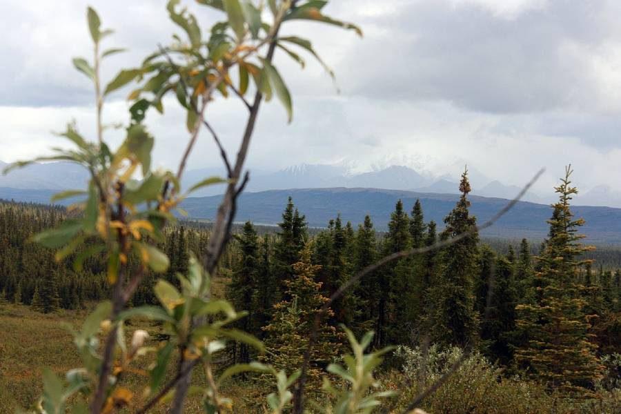 Ostoja szamana-Alaska -w pogoni za misiem (23)