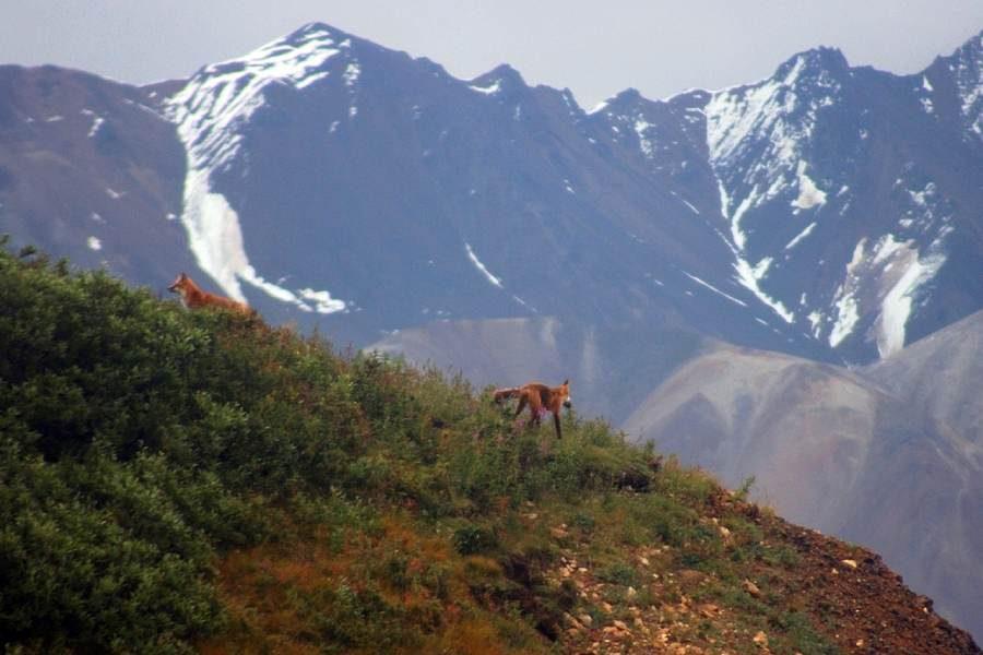 Ostoja szamana-Alaska -w pogoni za misiem (5)