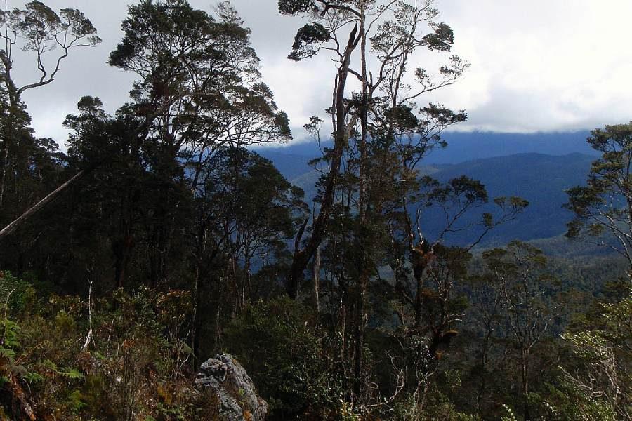 Ostoja szamana-Irian Jaya – samotnie wśród ludożerców (2)