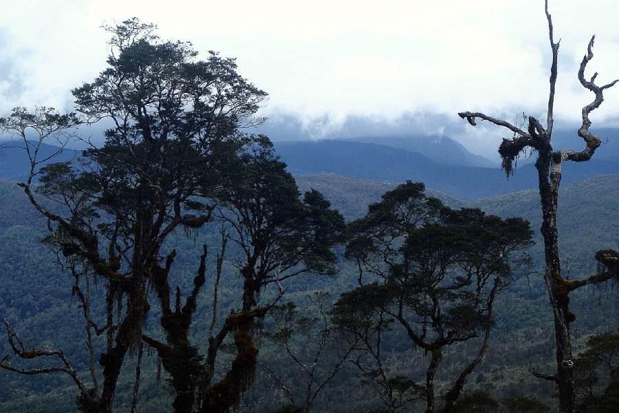 Ostoja szamana-Irian Jaya – samotnie wśród ludożerców (8)