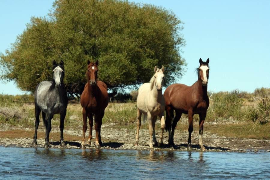 Ostoja szamana-Patagonia-u Indian Mapuchy (11)