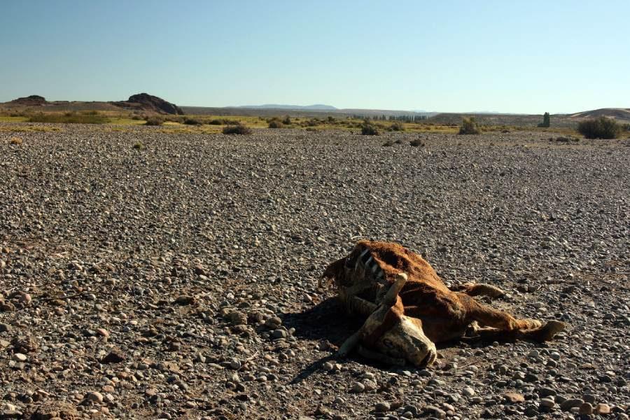 Ostoja szamana-Patagonia-u Indian Mapuchy (16)