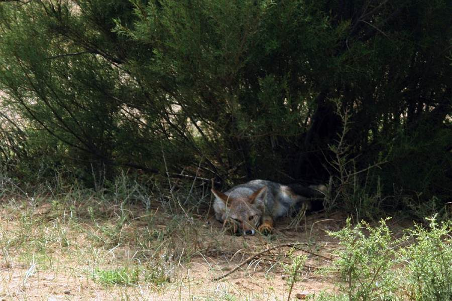 Ostoja szamana-Patagonia-u Indian Mapuchy (27)